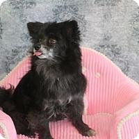 Adopt A Pet :: Callisto  (aka Cally) - Dallas, TX