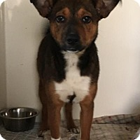 Adopt A Pet :: Lucy - Mooresville, NC