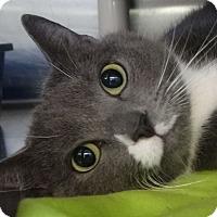 Adopt A Pet :: Bam Bam - Elyria, OH