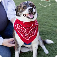 Adopt A Pet :: Scruffy - Scottsdale, AZ