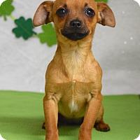 Adopt A Pet :: Nikita - Dublin, CA