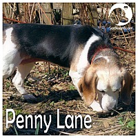 Adopt A Pet :: Penny Lane - Chicago, IL