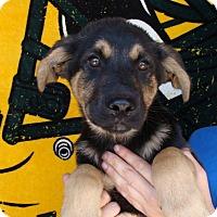 Adopt A Pet :: Hero - Oviedo, FL