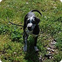 Adopt A Pet :: Bayou - Oakland, AR