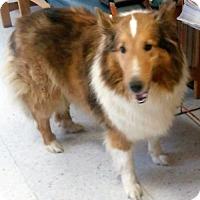 Adopt A Pet :: Gracie Grace Lassie - Maryville, TN
