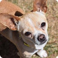Adopt A Pet :: Felix - Meridian, ID