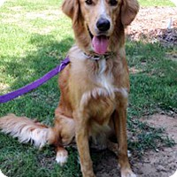 Adopt A Pet :: Sadie Mae - BIRMINGHAM, AL