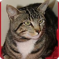 Adopt A Pet :: Taz - Idaho Falls, ID