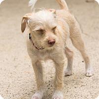 Adopt A Pet :: Anniston - Woonsocket, RI