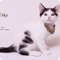 Adopt A Pet :: Nike - Riverside, CA
