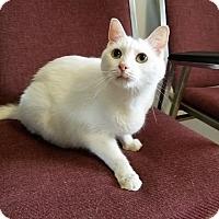 Adopt A Pet :: Aspen - Umatilla, FL