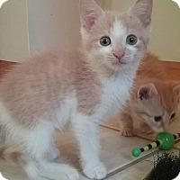 Adopt A Pet :: Nathan - Plainville, CT