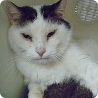Adopt A Pet :: Buzi - Hamburg, NY
