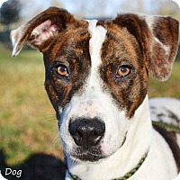 Adopt A Pet :: Taylor - Stillwater, OK