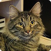 Adopt A Pet :: Cutty-Super Sweet - Arlington, VA