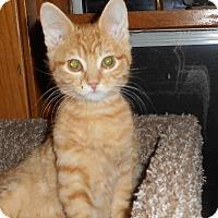 Adopt A Pet :: Eggnog - Rochester, MN