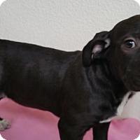Adopt A Pet :: Crystal - Stockton, CA