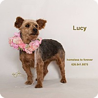 Adopt A Pet :: Lucy - Sherman Oaks, CA