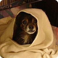 Adopt A Pet :: Hap- In Dayton - Dayton, OH