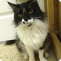 Adopt A Pet :: Kiki - St. James City, FL