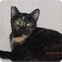 Adopt A Pet :: Lolita - Los Angeles, CA