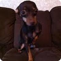 Adopt A Pet :: Samatha - Justin, TX