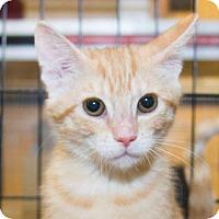 Adopt A Pet :: Sadie - Irvine, CA