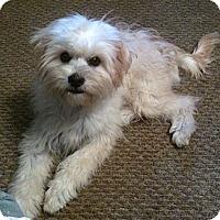 Adopt A Pet :: Jack - Westport, CT