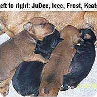 Adopt A Pet :: Keats - Minneapolis, MN