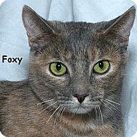 Adopt A Pet :: Foxy B - Sacramento, CA
