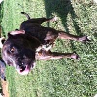 Adopt A Pet :: Carson - Blanchard, OK