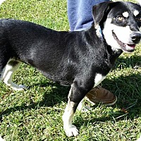 Adopt A Pet :: Pearle - La Follette, TN