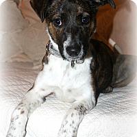 Adopt A Pet :: Cami - Sinking Spring, PA