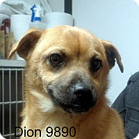 Adopt A Pet :: Dion - baltimore, MD