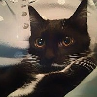 Adopt A Pet :: Miss Mario - St. Louis, MO