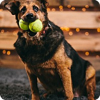 Adopt A Pet :: Duvis - Portland, OR