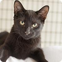 Adopt A Pet :: Johnnie Ryan - Chicago, IL
