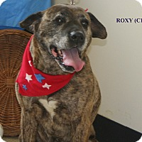 Adopt A Pet :: Roxy - Tiffin, OH