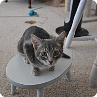 Adopt A Pet :: Bancsey - Encinitas, CA