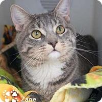Adopt A Pet :: Zane - Merrifield, VA