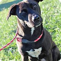 Adopt A Pet :: Talia - Waldorf, MD