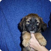 Adopt A Pet :: Kelley - Oviedo, FL