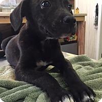 Adopt A Pet :: Sissy - Waycross, GA
