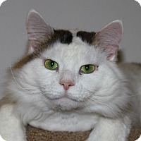 Adopt A Pet :: Vitti - North Branford, CT