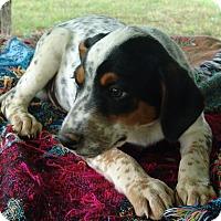Adopt A Pet :: Jake - Staunton, VA