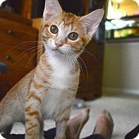 Adopt A Pet :: Cutie - St. Charles, MO
