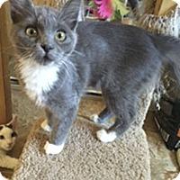Adopt A Pet :: Roxy - El Dorado Hills, CA