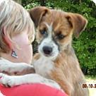 Adopt A Pet :: Baloulah (8 lb) Video!