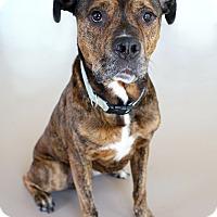 Adopt A Pet :: Donald - Appleton, WI