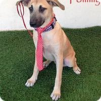 Adopt A Pet :: Tommy - San Diego, CA
